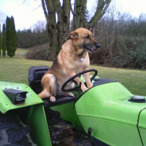 Just A Dog On A Tractor