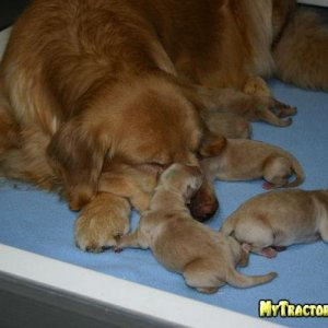 Bubba and Her Pups